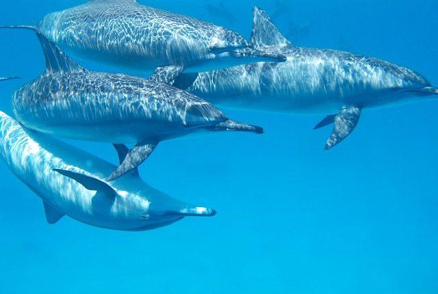 delfin-ägypten-schnorcheln