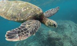 schildkröte-schnorcheln-ägypten