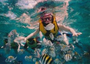 Schnorcheln auf Mauritus mit Fischen